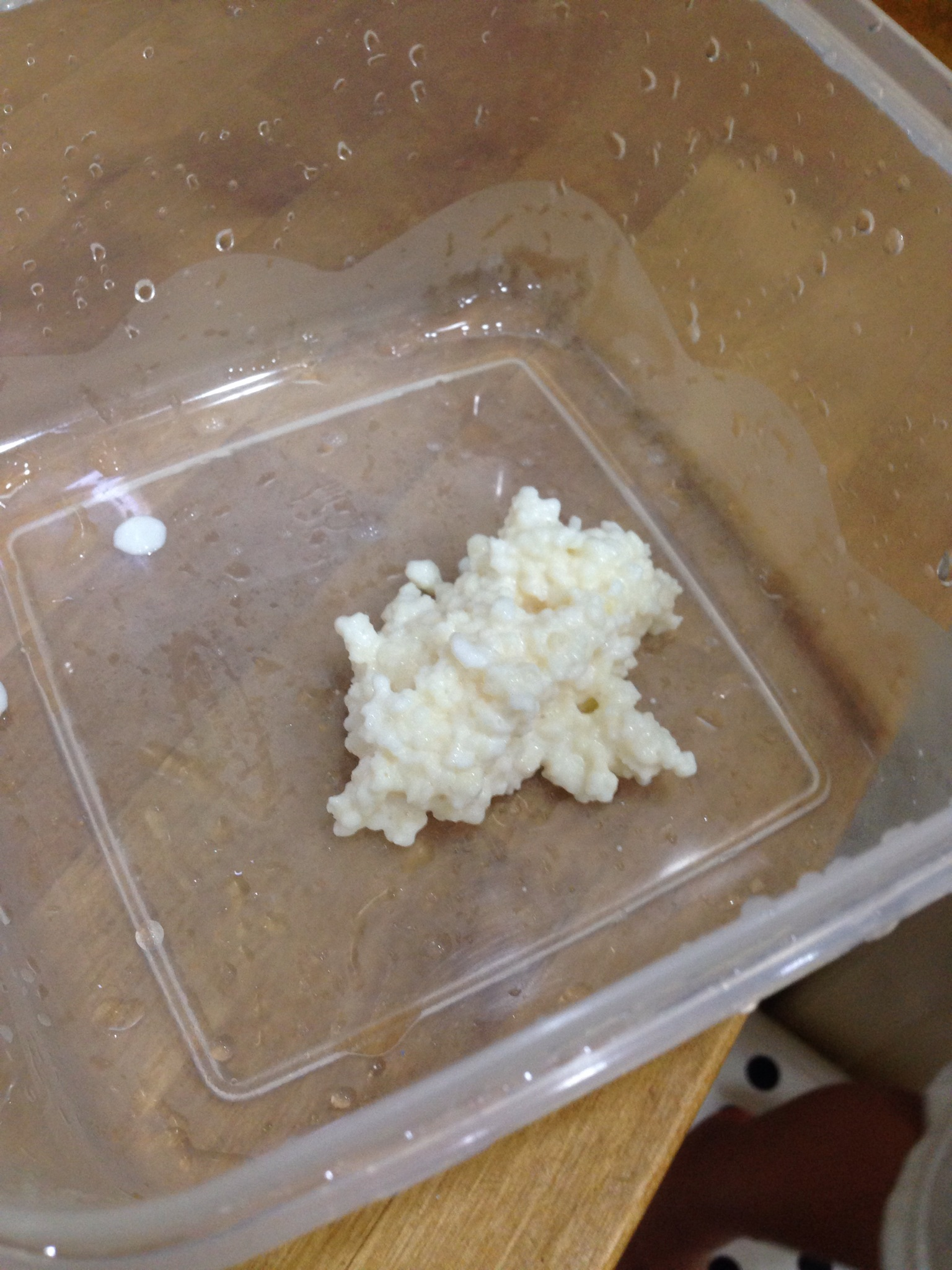 milk kefir grains.JPG